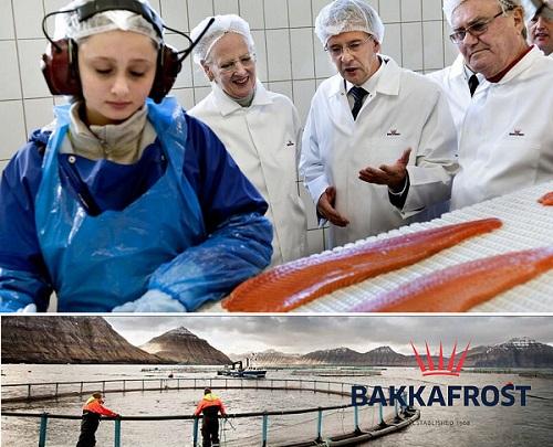 BLOGS - Bakkafrost